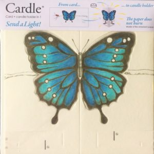 mayves-cardle-bright-butterfly-blue