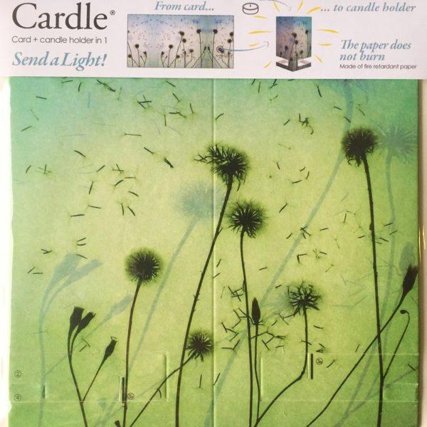 mayves-cardle-breezily-dawn